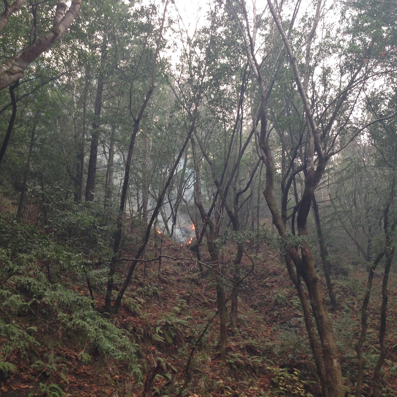 fernwood campground | big sur california