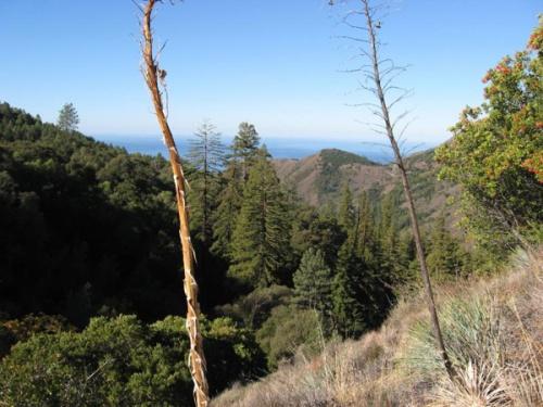 silver-peaks-wilderness